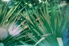 Green leaves of a palm tree abstract pattern background. Bokeh and flares toned Stock Photography