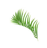 Green leaves of palm tree isolated on white Royalty Free Stock Photography
