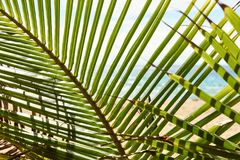 Green leaves palm tree. Sea shore. Beautiful view. Palm trees Royalty Free Stock Photo