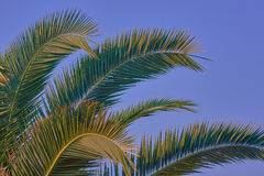 Green leaves of palm trees Stock Photography