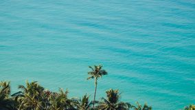 Green leaves of palmtree at blue sea water. On exotic tropical island. Scenic and peaceful background of perfect sea shore stock video footage