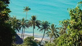 Green leaves of palmtree at blue sea water. On exotic tropical island. Scenic and peaceful background of perfect sea shore stock video