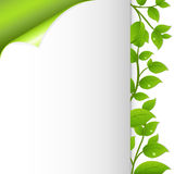 Green Leaves And Paper. Vector Royalty Free Stock Photos