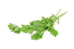 Green leaves of parsley  on white Stock Images