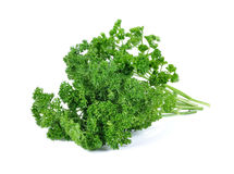 Green leaves of parsley Royalty Free Stock Photos