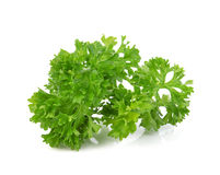 Green leaves of parsley  on white background Royalty Free Stock Photos