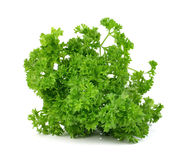 Green leaves of parsley  on white background Royalty Free Stock Images