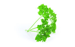 Green leaves of parsley  on white background Stock Photography