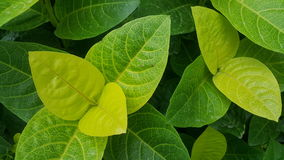 Green leaves. Pattern Royalty Free Stock Image