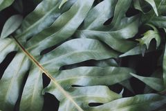 Green leaves pattern stock image