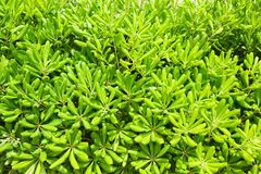 Green leaves pattern Stock Photos