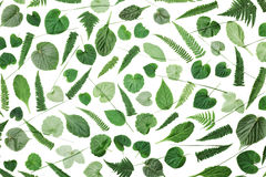 Green leaves pattern isolated on white background top view. Flat lay styling. Royalty Free Stock Photography