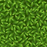 Green leaves pattern. Seamless vector. Royalty Free Stock Photos