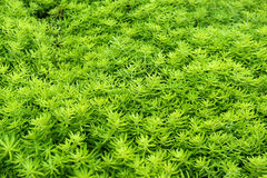 Green leaves pattern. Stock Images