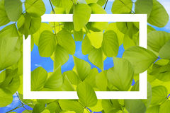 Green leaves pattern texture on blue sky background with white frame. For text input.  Royalty Free Stock Photography