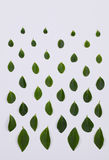 Green leaves pattern on white background Stock Image