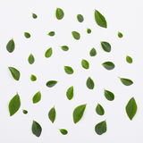 Green leaves pattern on white background Stock Images