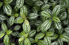 Green Leaves Patterns