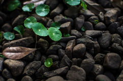 Green Leaves and Pebbles Stock Image