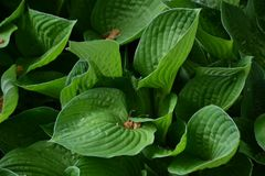 Green leaves perfect for print. Photo of green leaves, perfect for background, print and texture stock photography