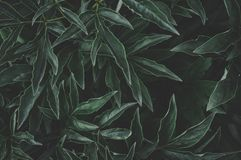 Green Leaves Photo Stock Photos