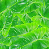Green leaves pile Royalty Free Stock Images