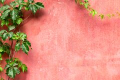 Green leaves on pink red wall background. Free space. Design mockup