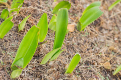 Green leaves of the plant Stock Photography