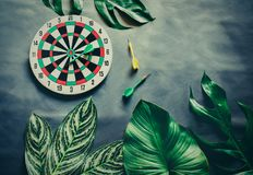Green leaves plant growing with dart board, the tropical plant a Stock Photos