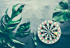 Green leaves plant growing with dart board. The tropical plant and game stock photo