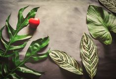 Green leaves plant growing and red heart Royalty Free Stock Image