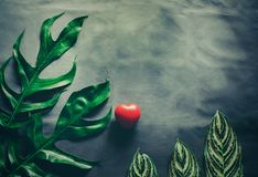 Green leaves plant growing and red heart Stock Images