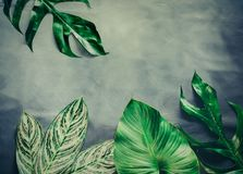 Green leaves plant growing, the tropical Royalty Free Stock Photo