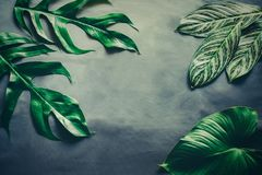 Green leaves plant growing, the tropical. Plant stock image