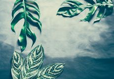 Green leaves plant growing, the tropical. Plant royalty free stock photography