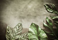 Green leaves plant growing, the tropical. Plant stock photos