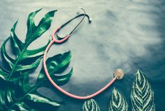 Green leaves plant growing wit pink stethoscope. The tropical plant stock image