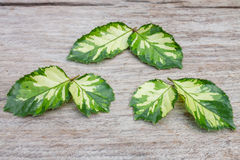 Green leaves plant Stock Image