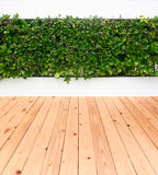 Green leaves plant on wall with wood floor Stock Photos