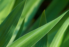 Green leaves of plants Stock Photo