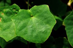 Leaves green polygon shaped nature stock image