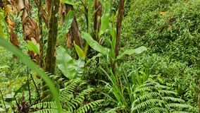 Green leaves after the rain in the jungle stock footage