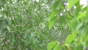 Green leaves in the rain. stock video footage
