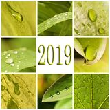 2019 green leaves and raindrops photo collage. 2019, green leaves and raindrops photo collage royalty free stock image