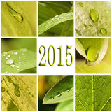 2015, green leaves and raindrops Royalty Free Stock Photography