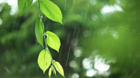 Green leaves in rainy weather. Warm summer rain in forest. Wet leaves close-up stock footage