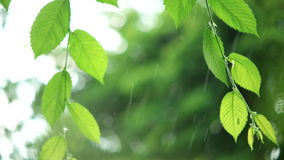 Green leaves in rainy weather. Warm summer rain in forest. Wet leaves close-up stock video footage