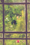 Green leaves on rainy window Stock Image