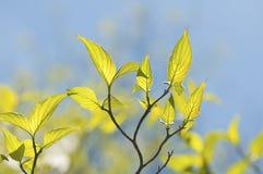 Green leaves reaching toward the sky Stock Photos
