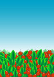 Green leaves and red fruit. A lot of green leaves and red fruit, in the sky in the background vector illustration